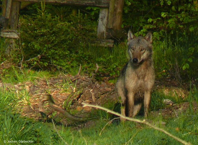 führen wie die wölfe